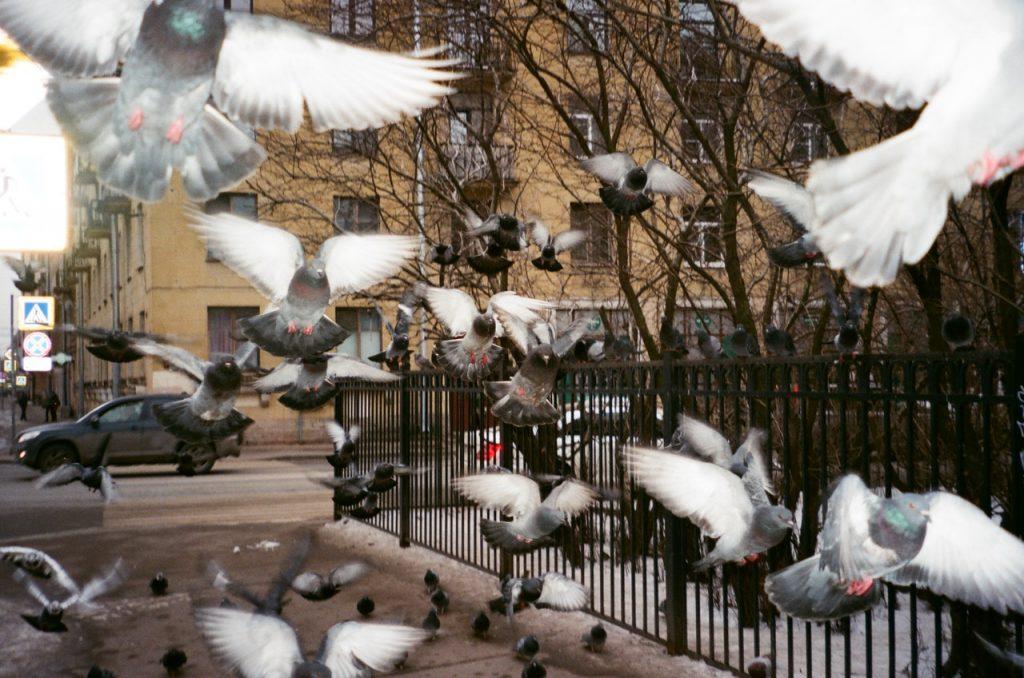Las aves urbanas pueden transmitir varias enfermedades